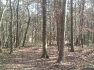 woodlands_gallery01