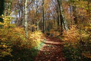 Woodlands_AuthenticManhood02