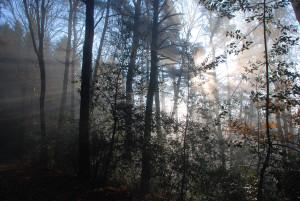Woodlands_Journey02